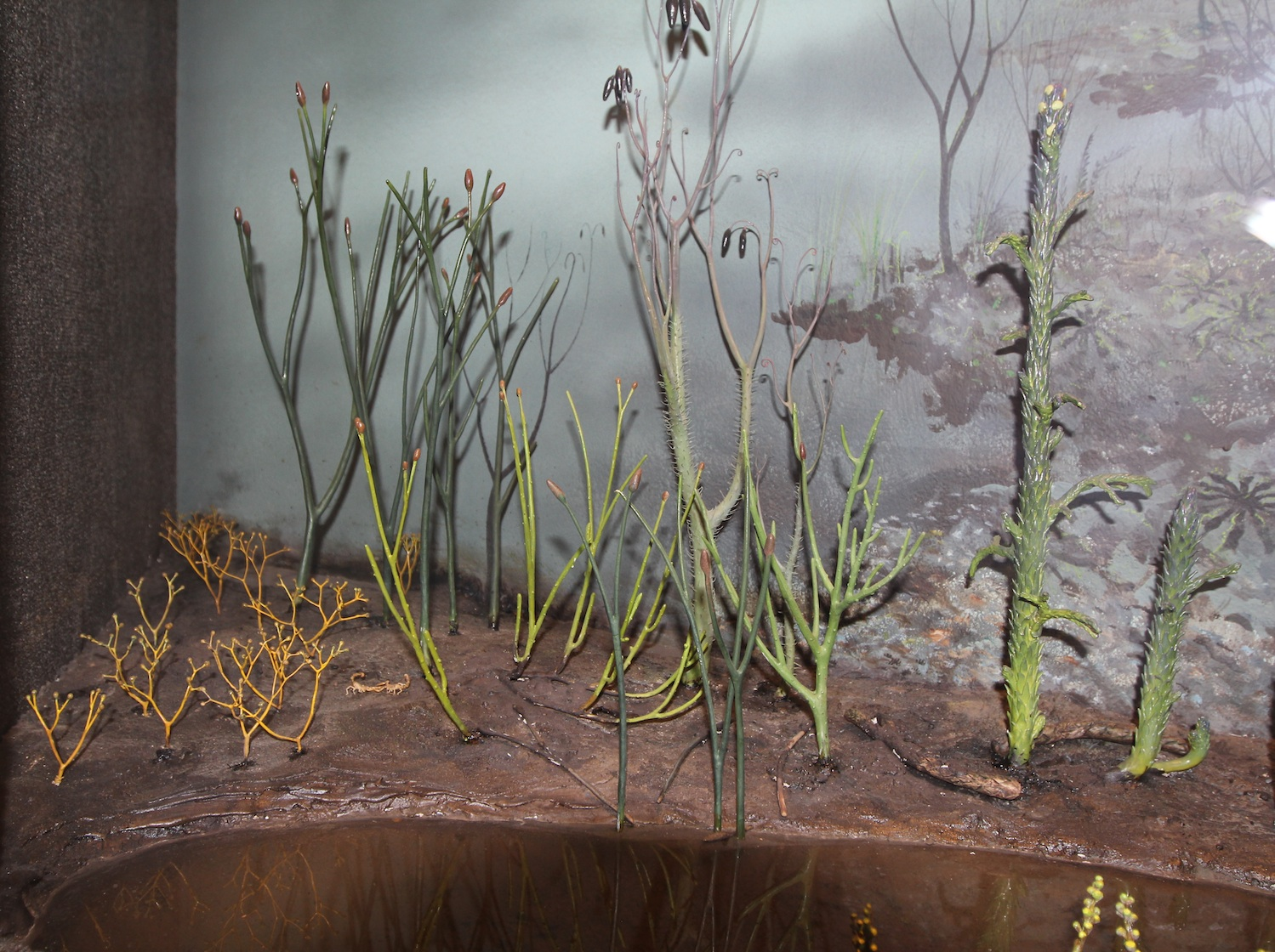 Milwaukee Public Museum's diorama of the early colonization of land during the Silurian bygroups of some of the first land plants.