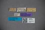 3047815 Trigonurus brasilianus HT labels IN