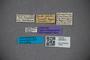 3047814 Gastrisus nitidus ST labels IN