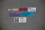 3047812 Stenus icon HT labels IN