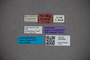 3047804 Stenus holdhausi ST labels2 IN