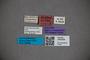 3047804 Stenus holdhausi ST labels IN