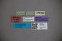 3047828 Stenus intemeratus ST labels2 IN