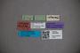 3047828 Stenus intemeratus ST labels IN