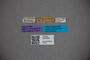 3047830 Stenus kaguruensis HT labels IN