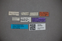 3047832 Stenus kardaschi ST labels2 IN