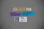 3047854 Stenus leonhardi ST labels IN