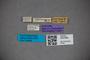 3047856 Stenus leptocerus ST labels IN