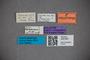 3047857 Stenus leptodomus HT labels IN