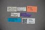 3047859 Stenus leptosoma HT labels2 IN