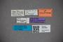 3047859 Stenus leptosoma HT labels IN