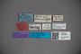 3047863 Stenus lugubris ST labels2 IN