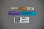 3047871 Stenus magniceps HT labels IN