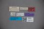 3047873 Stenus malignus ST labels IN