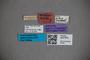 3047876 Stenus mashunensis ST labels IN