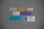 3047877 Stenus matumbiensis HT labels IN