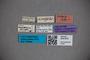 3047879 Stenus mendosus HT labels2 IN
