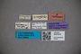 3047879 Stenus mendosus HT labels IN