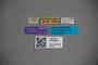 3047881 Stenus metallescens LT labels IN