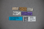 3047883 Stenus metkovichensis HT labels IN
