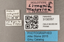 3130357 Limonia majorina HT labels IN