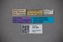 3047886 Stenus microcephalus ST labels IN