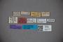 3047887 Stenus mimus ST labels2 IN