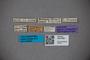3047890 Stenus mombassanus ST labels IN