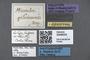 3048034 Microbrachida gilvicornis HT labels IN