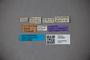 3047899 Stenus mortuorum ST labels IN
