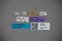 3047901 Stenus murphyanus HT labels IN