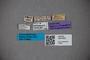 3047902 Stenus naevius ST labels IN
