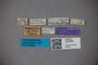 3047903 Stenus nagasakianus ST labels IN