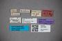 3047908 Stenus necessarius ST labels IN