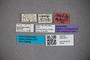 3047911 Stenus nigrotibialis ST labels2 IN