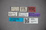 3047911 Stenus nigrotibialis ST labels IN