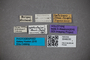 3048030 Edaphus ophthalmicus HT labels IN