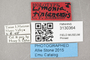 3130364 Limonia tinianensis HT labels IN