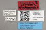3130365 Limonia tinianensis AT labels IN