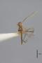 3130371 Aedes lunulatus PT h IN