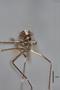 3130372 Aedes subalbitarsis PT h IN