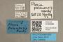3130385 Plecia palauensis PT labels IN