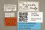 3130386 Plecia visenda PT labels IN