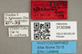 3130388 Chrysops stekhoveni T labels IN