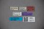 3047917 Stenus obscuricornis ST labels IN