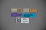 3047919 Stenus ogloblini HT labels IN
