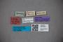3047921 Stenus opportunus ST labels2 IN