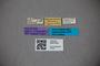 3047923 Stenus paederoides HT labels IN