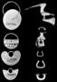 155587: Gold earrings