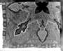 166317: Kashmir Shawl